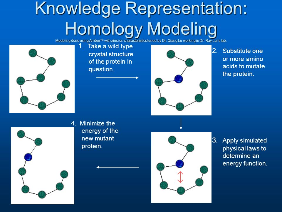 Knowledge Representation: Homology Modeling Modeling done using Amber with zinc ion characteristics tuned by Dr.