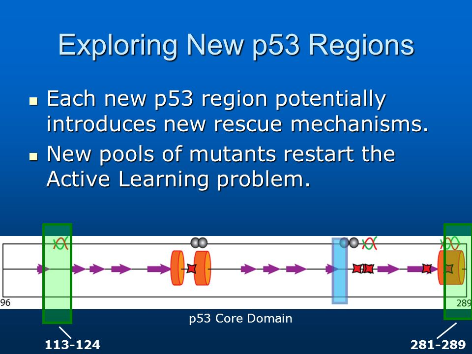 Exploring New p53 Regions Each new p53 region potentially introduces new rescue mechanisms. Each new p53 region potentially introduces new rescue mech