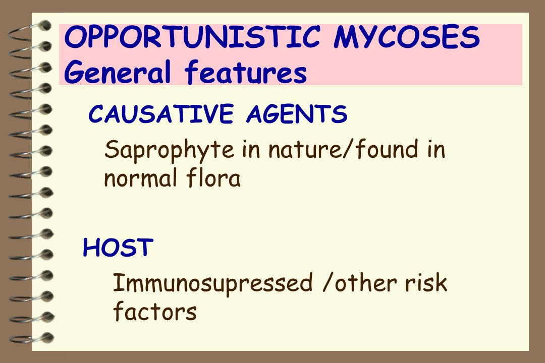 OPPORTUNISTIC MYCOSES General features CAUSATIVE AGENTS Saprophyte in nature/found in normal flora HOST Immunosupressed /other risk factors