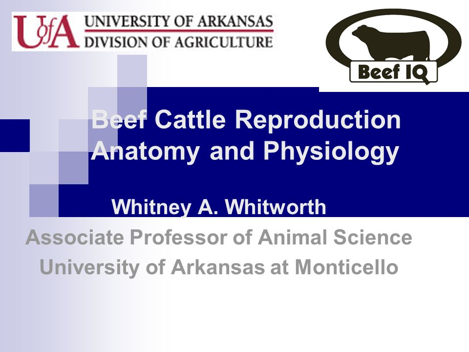 Beef Cattle Reproduction Anatomy and Physiology Whitney A. Whitworth Associate Professor of Animal Science University of Arkansas at Monticello