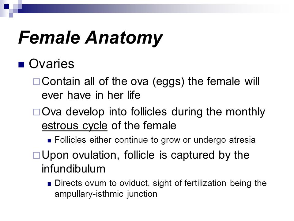 Female Anatomy Ovaries Contain all of the ova (eggs) the female will ever have in her life Ova develop into follicles during the monthly estrous cycle