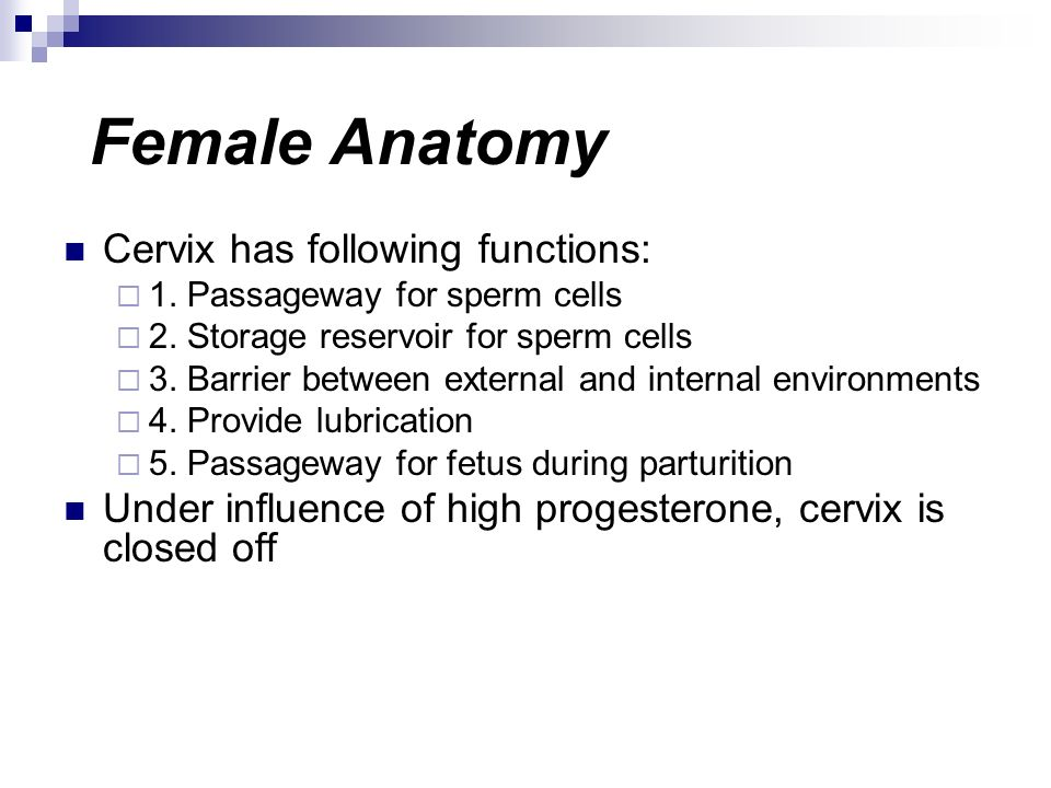 Female Anatomy Cervix has following functions: 1. Passageway for sperm cells 2. Storage reservoir for sperm cells 3. Barrier between external and inte