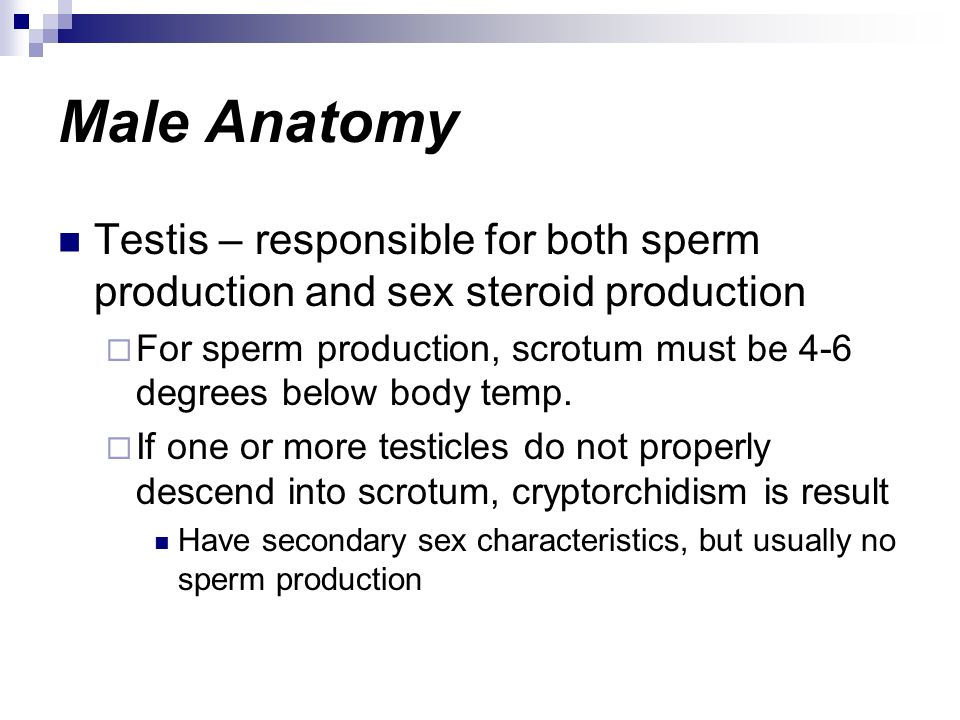 Male Anatomy Testis – responsible for both sperm production and sex steroid production For sperm production, scrotum must be 4-6 degrees below body te