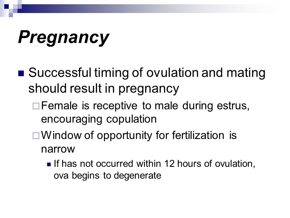 Pregnancy Successful timing of ovulation and mating should result in pregnancy Female is receptive to male during estrus, encouraging copulation Windo