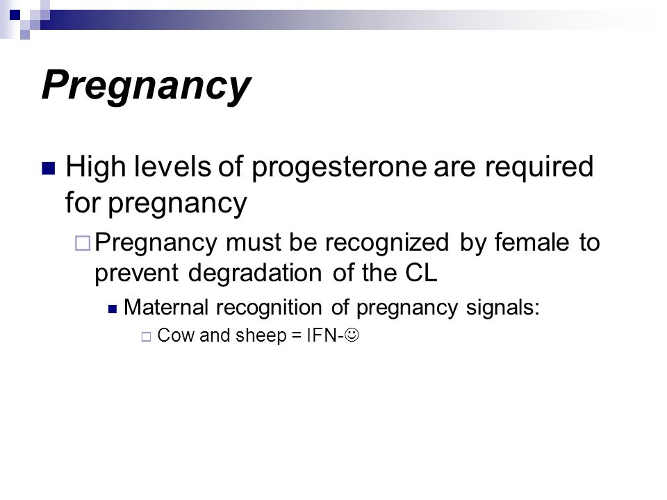 Pregnancy High levels of progesterone are required for pregnancy Pregnancy must be recognized by female to prevent degradation of the CL Maternal reco
