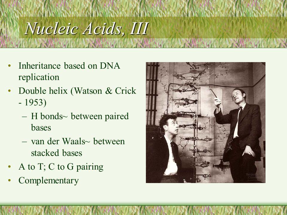 Nucleic Acids, III Inheritance based on DNA replication Double helix (Watson & Crick - 1953) –H bonds~ between paired bases –van der Waals~ between st