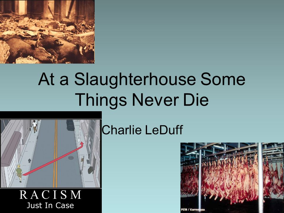 At a Slaughterhouse Some Things Never Die Charlie LeDuff
