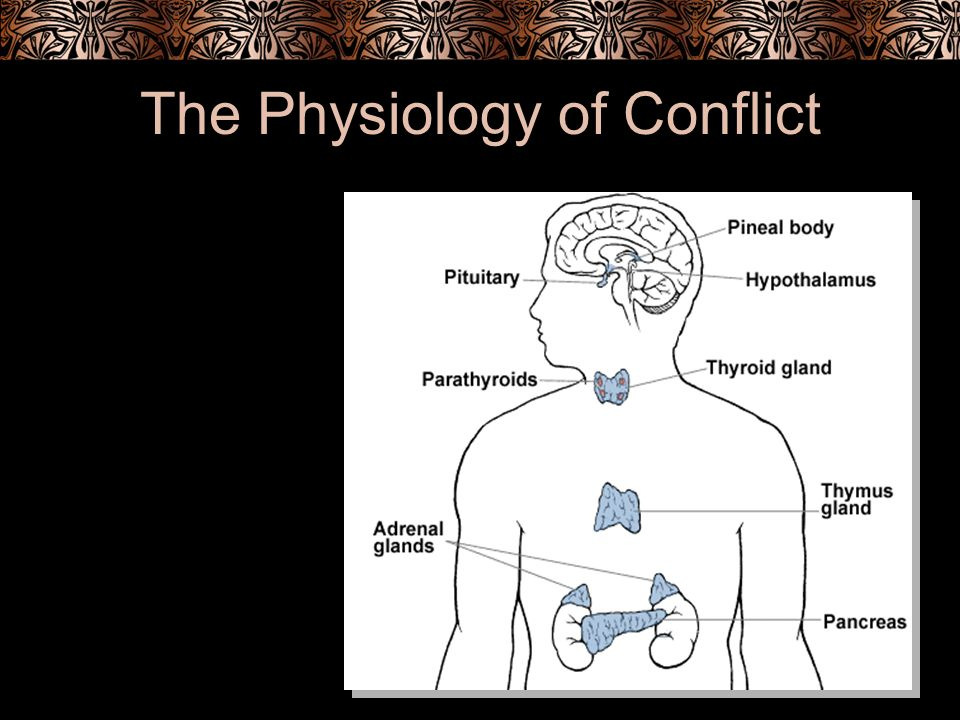 The Physiology of Conflict
