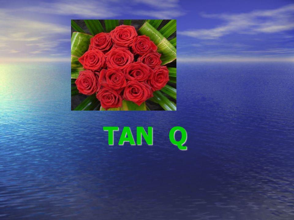 TAN Q TAN Q