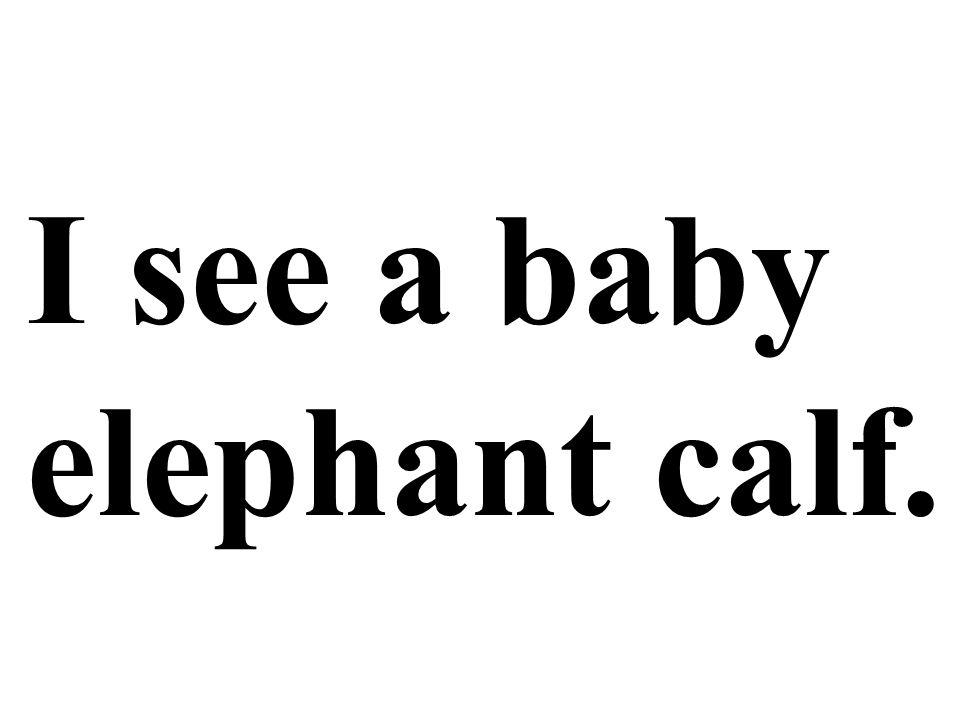 I see a baby elephant calf.