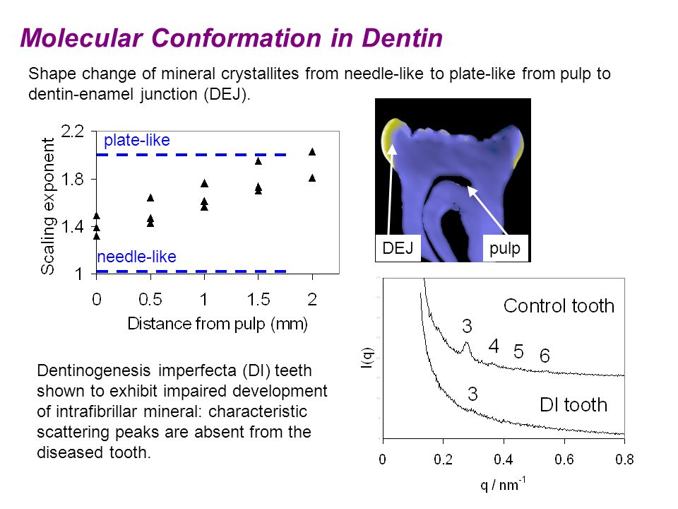 Shape change of mineral crystallites from needle-like to plate-like from pulp to dentin-enamel junction (DEJ). pulpDEJ needle-like plate-like Dentinog
