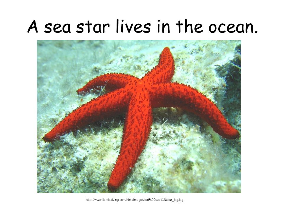 A sea star lives in the ocean. http://www.liamisdiving.com/html/images/red%20sea%20star_jpg.jpg