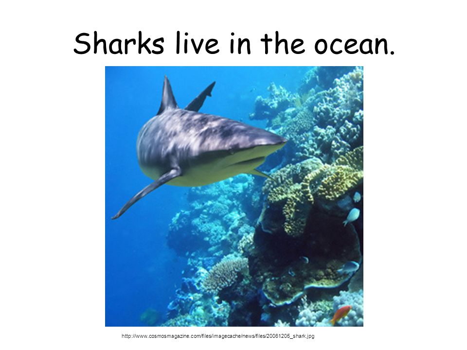 Sharks live in the ocean.