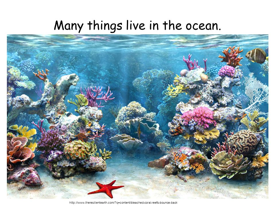 Many things live in the ocean.