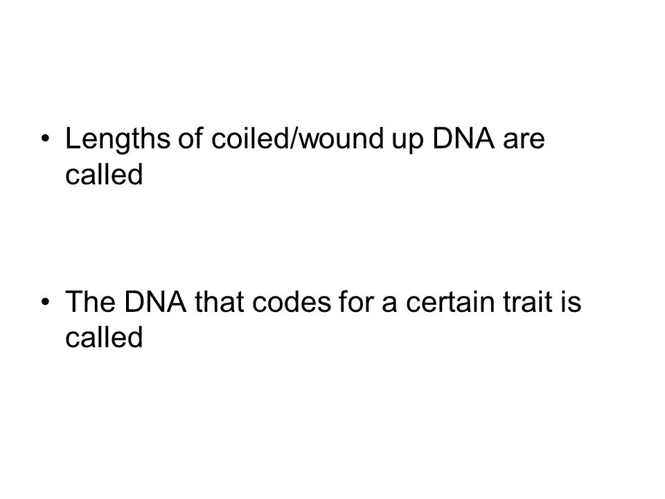 Lengths of coiled/wound up DNA are called The DNA that codes for a certain trait is called