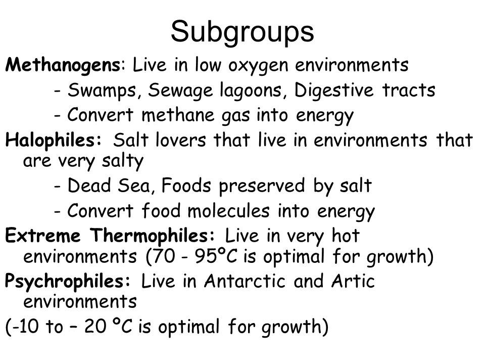 Subgroups Methanogens: Live in low oxygen environments - Swamps, Sewage lagoons, Digestive tracts - Convert methane gas into energy Halophiles: Salt l