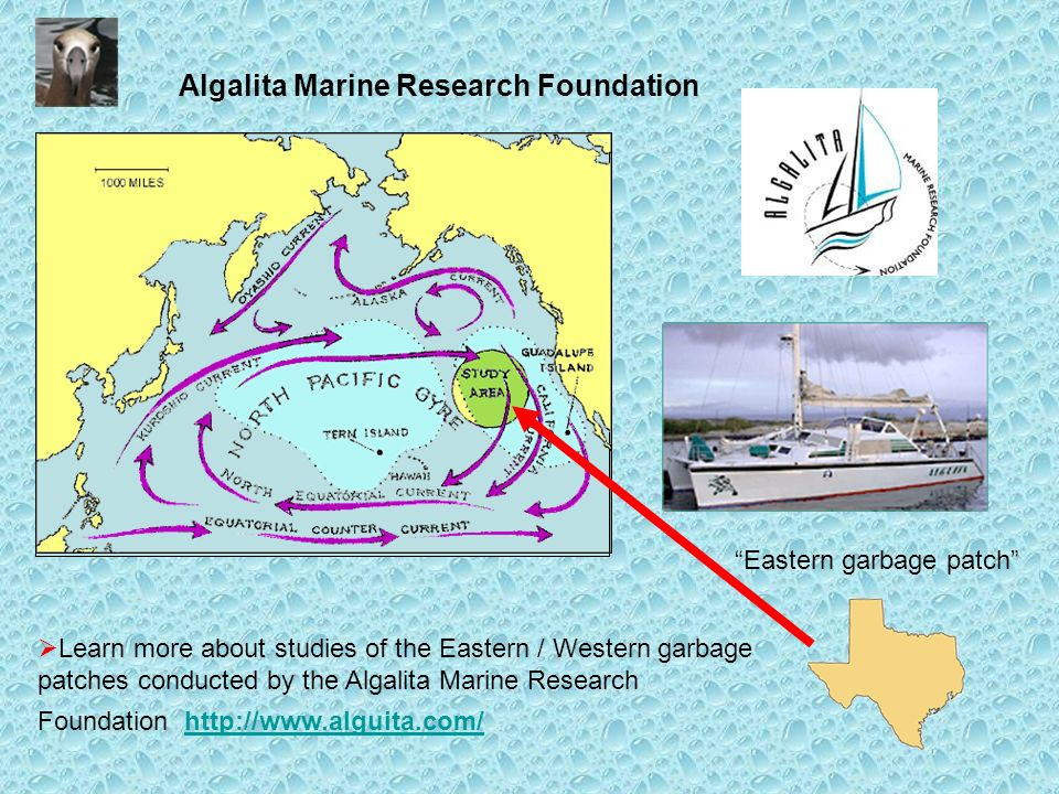 Algalita Marine Research Foundation Learn more about studies of the Eastern / Western garbage patches conducted by the Algalita Marine Research Foundation http://www.alguita.com/http://www.alguita.com/ Eastern garbage patch
