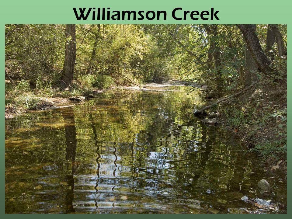 Williamson Creek