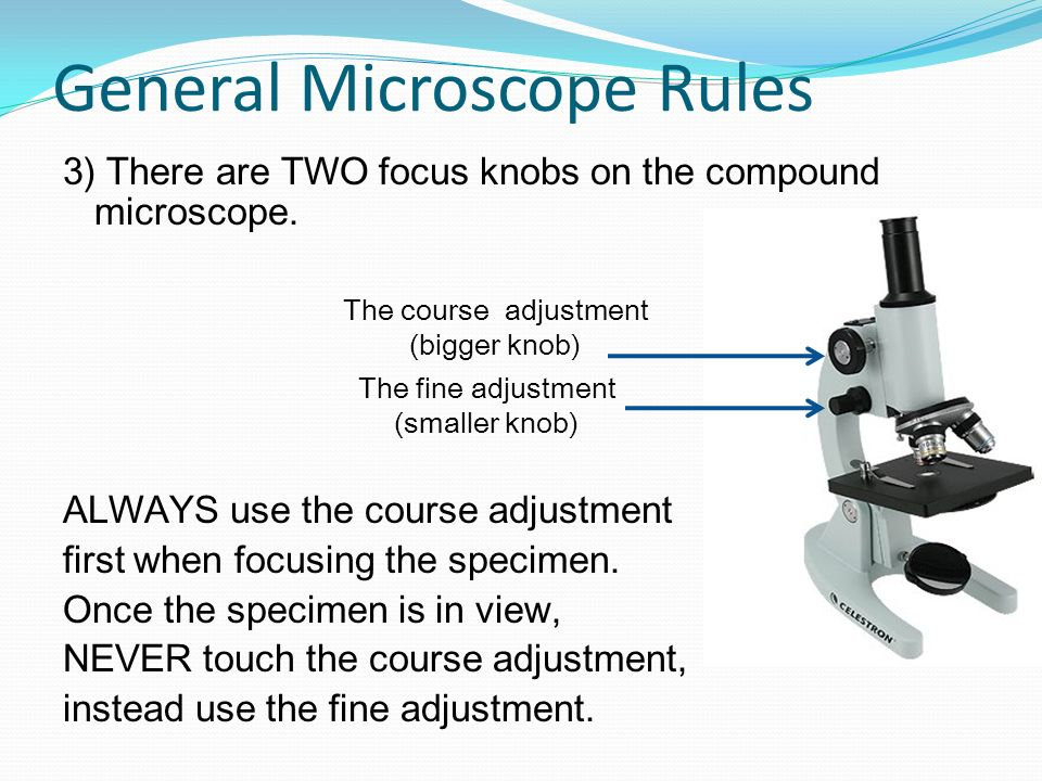 General Microscope Rules 3) There are TWO focus knobs on the compound microscope. ALWAYS use the course adjustment first when focusing the specimen. O