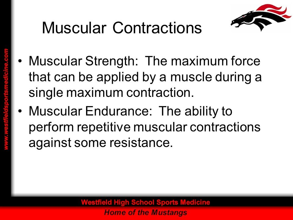 Muscular Contractions Muscular Strength: The maximum force that can be applied by a muscle during a single maximum contraction. Muscular Endurance: Th