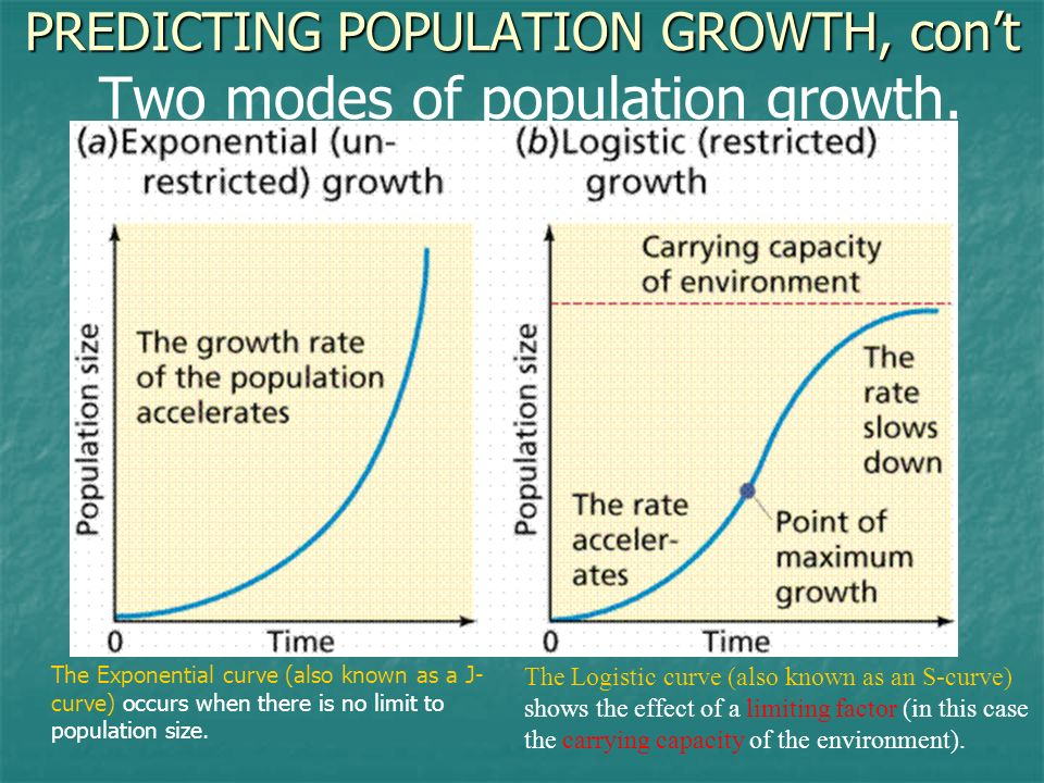 PREDICTING POPULATION GROWTH, cont PREDICTING POPULATION GROWTH, cont Two modes of population growth. The Exponential curve (also known as a J- curve)