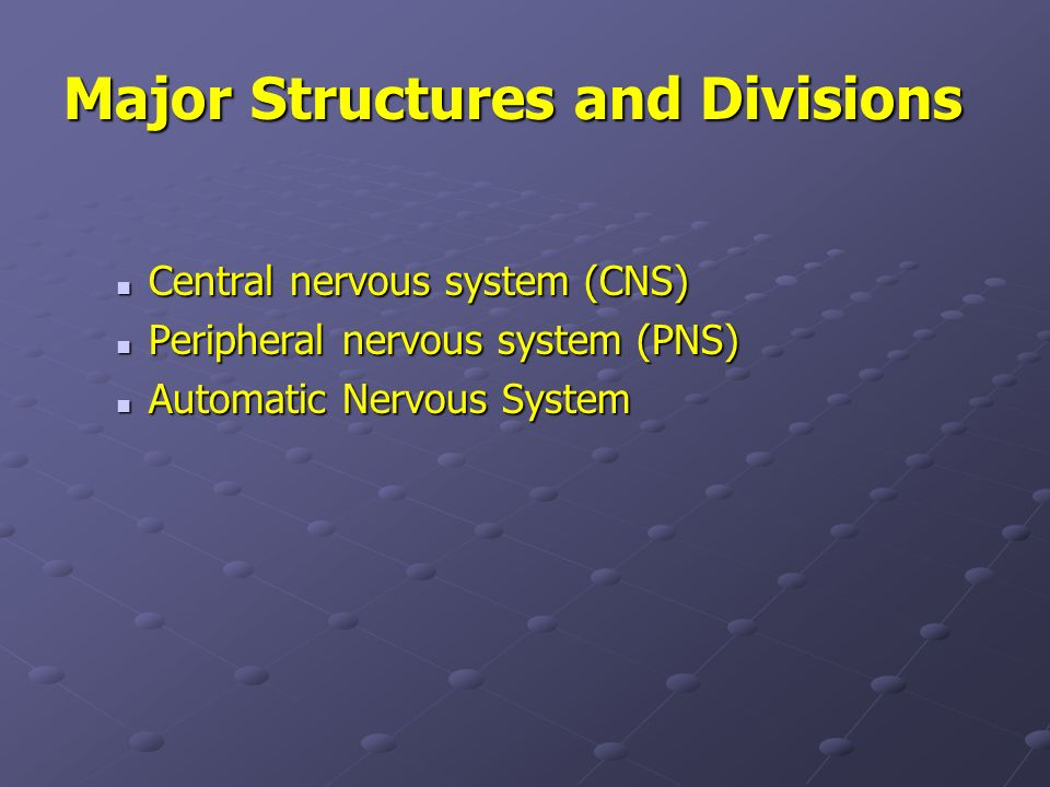 Major Structures and Divisions Central nervous system (CNS) Central nervous system (CNS) Peripheral nervous system (PNS) Peripheral nervous system (PN