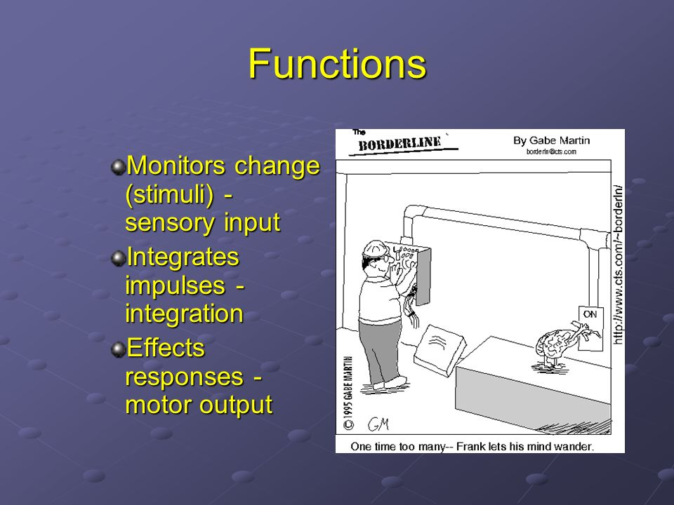 Functions Monitors change (stimuli) - sensory input Integrates impulses - integration Effects responses - motor output