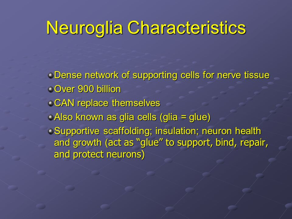 Neuroglia Characteristics Dense network of supporting cells for nerve tissue Over 900 billion CAN replace themselves Also known as glia cells (glia =