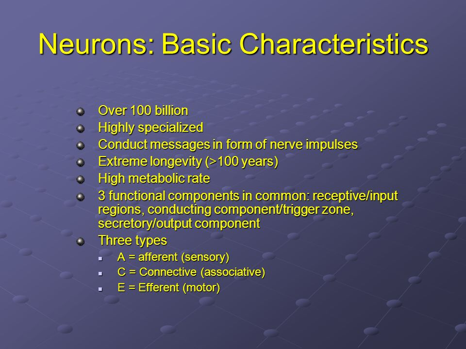 Neurons: Basic Characteristics Over 100 billion Highly specialized Conduct messages in form of nerve impulses Extreme longevity (>100 years) High meta