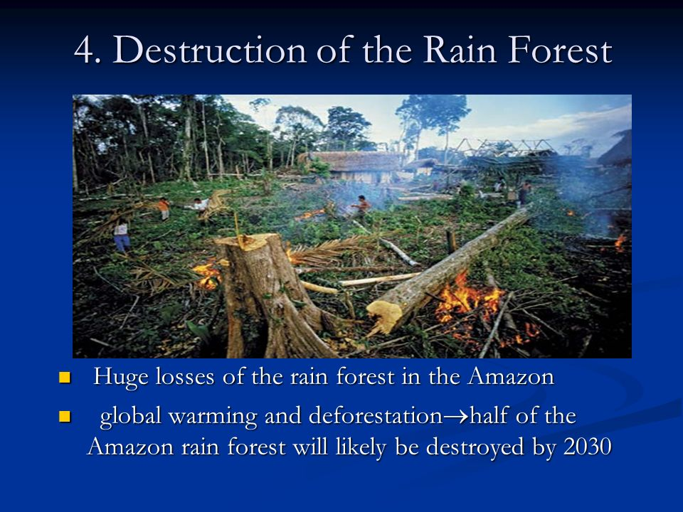 4. Destruction of the Rain Forest Huge losses of the rain forest in the Amazon global warming and deforestation half of the Amazon rain forest will li