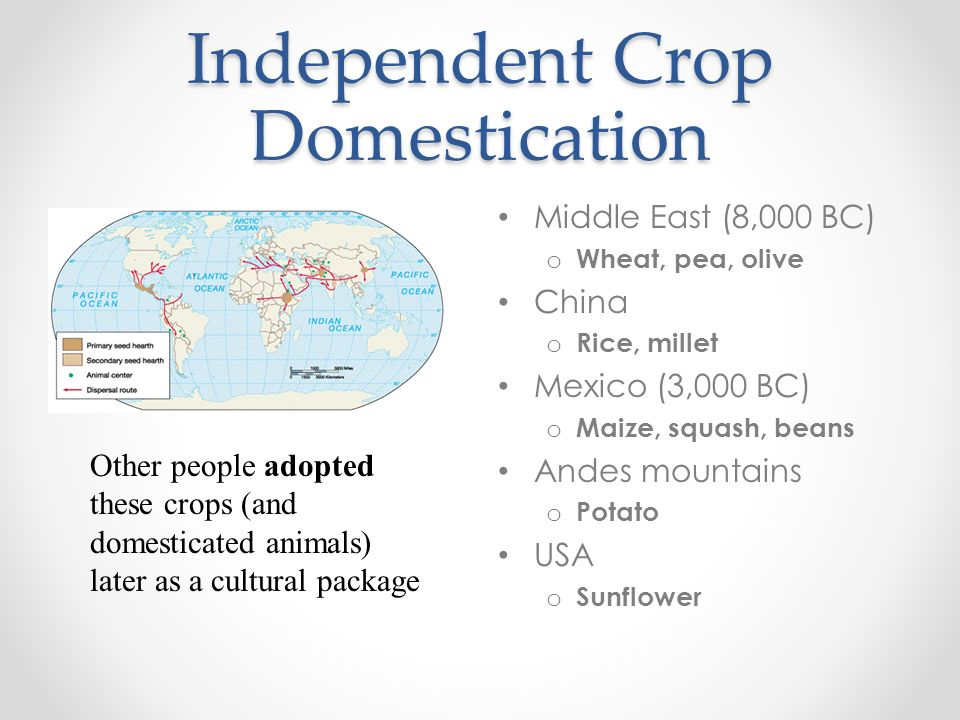 Independent Crop Domestication Middle East (8,000 BC) o Wheat, pea, olive China o Rice, millet Mexico (3,000 BC) o Maize, squash, beans Andes mountain