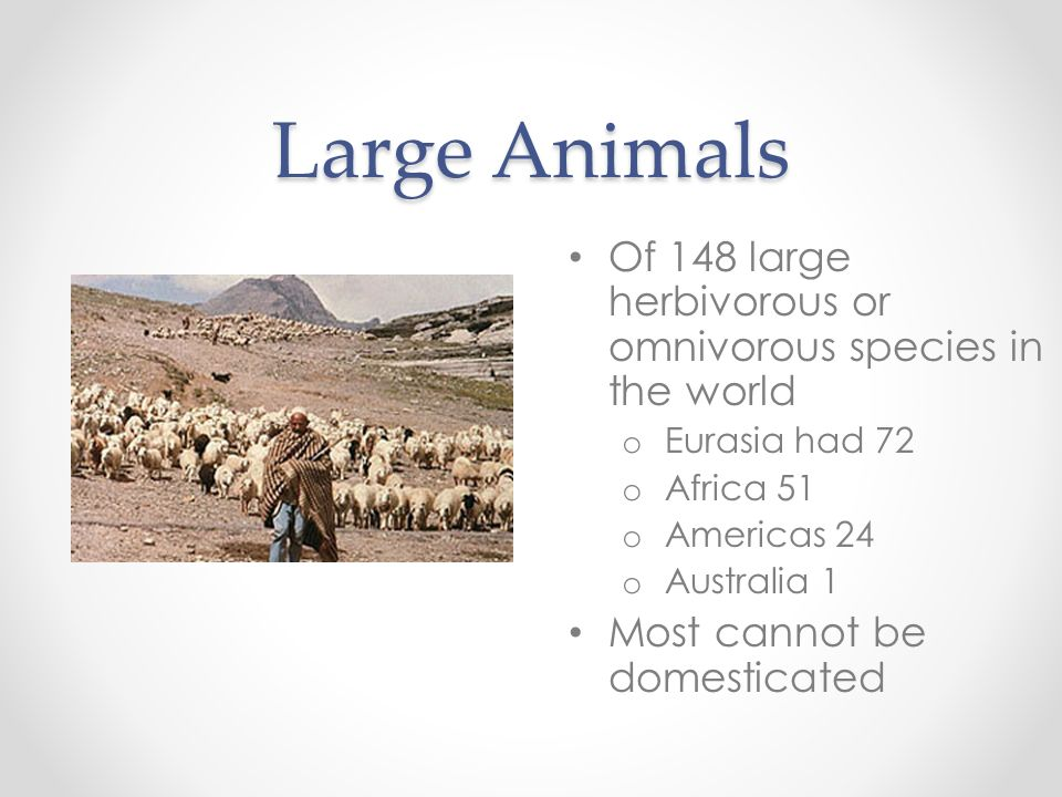 Large Animals Of 148 large herbivorous or omnivorous species in the world o Eurasia had 72 o Africa 51 o Americas 24 o Australia 1 Most cannot be dome