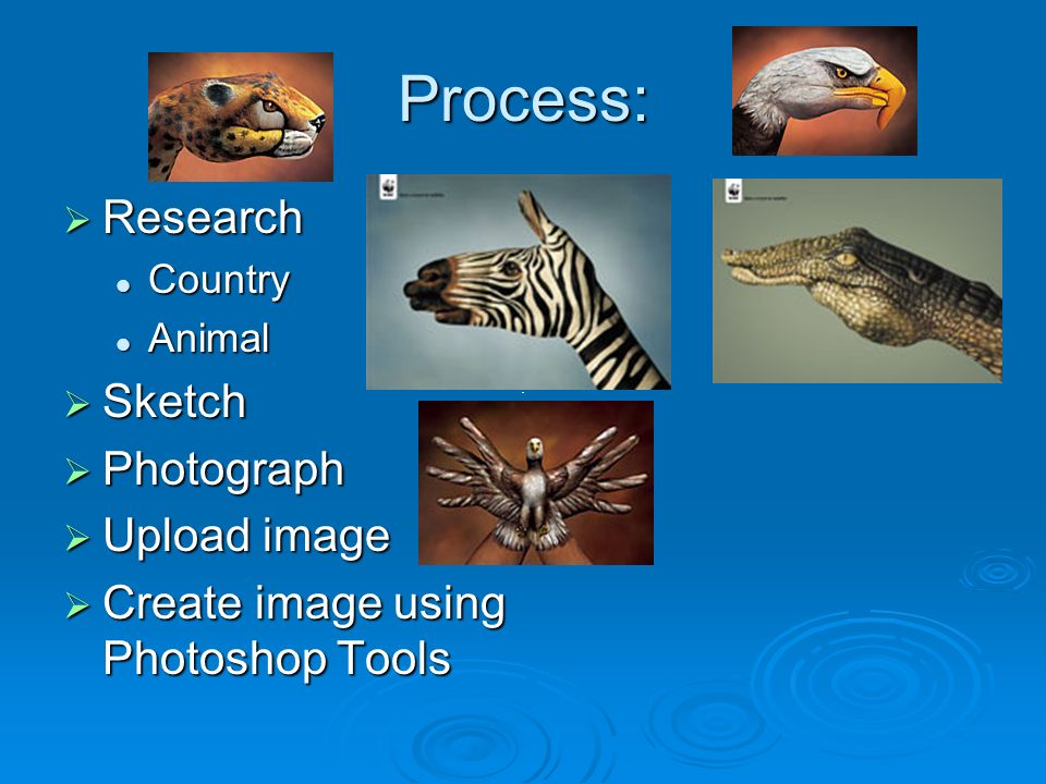 Process: Research Research Country Country Animal Animal Sketch Sketch Photograph Photograph Upload image Upload image Create image using Photoshop Tools Create image using Photoshop Tools