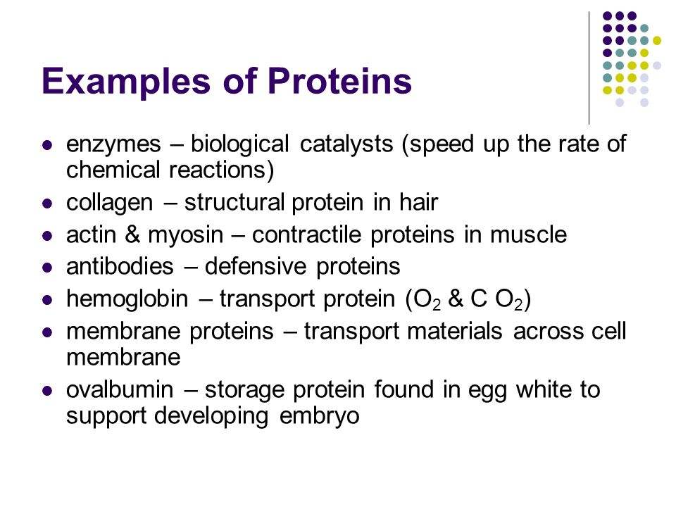 Examples Of Proteins Biology 8500979 Home Plusfo