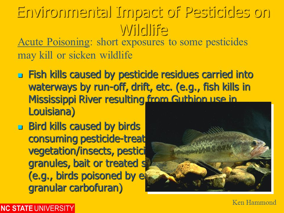 Environmental Impact of Pesticides on Wildlife Fish kills caused by pesticide residues carried into waterways by run-off, drift, etc. (e.g., fish kill