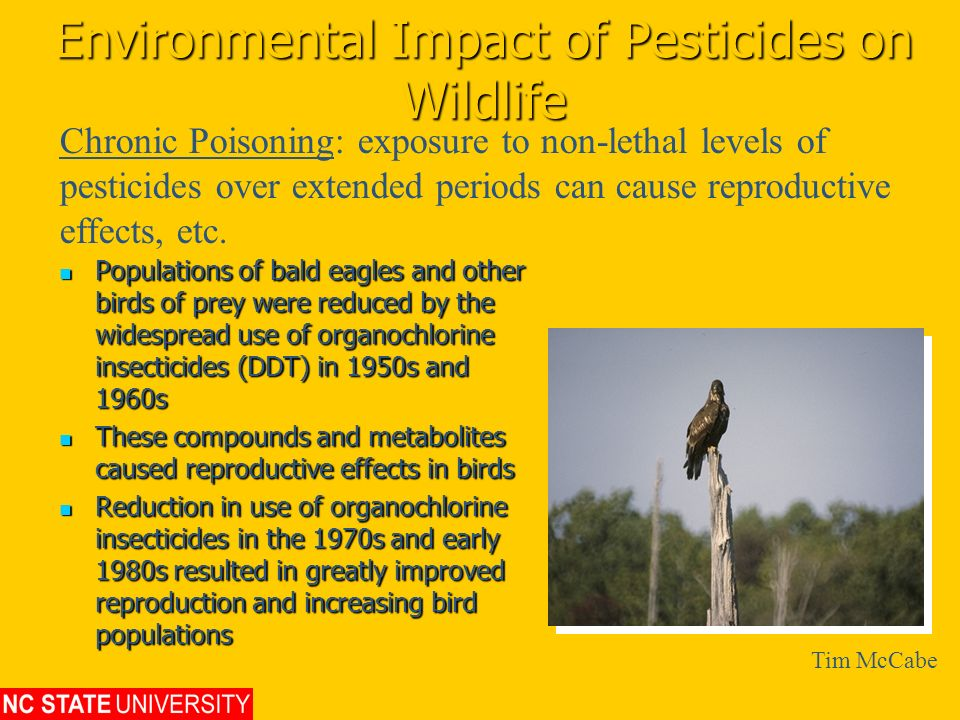Environmental Impact of Pesticides on Wildlife Populations of bald eagles and other birds of prey were reduced by the widespread use of organochlorine
