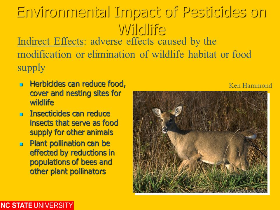 Environmental Impact of Pesticides on Wildlife Herbicides can reduce food, cover and nesting sites for wildlife Herbicides can reduce food, cover and