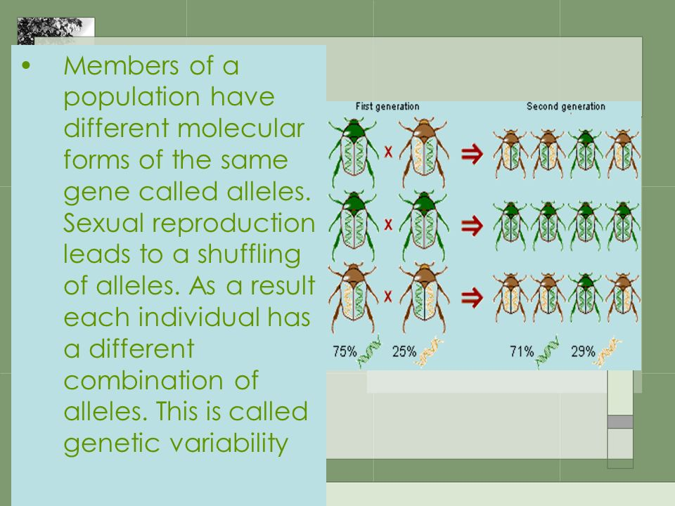 Members of a population have different molecular forms of the same gene called alleles. Sexual reproduction leads to a shuffling of alleles. As a resu