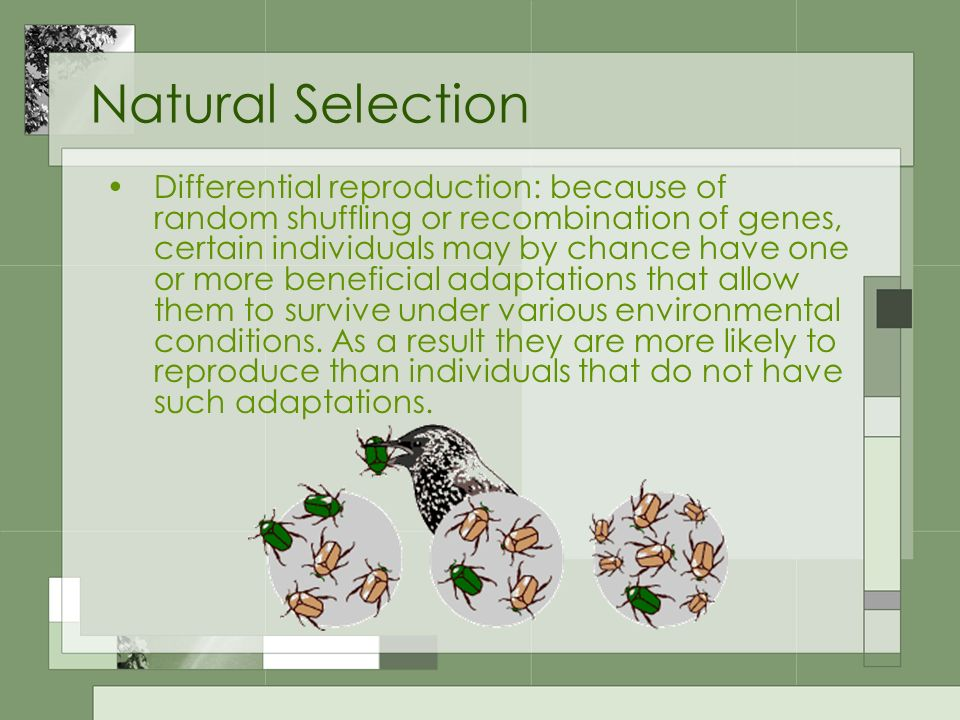 Natural Selection Differential reproduction: because of random shuffling or recombination of genes, certain individuals may by chance have one or more