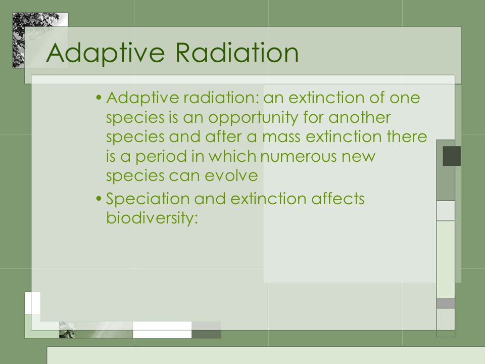 Adaptive Radiation Adaptive radiation: an extinction of one species is an opportunity for another species and after a mass extinction there is a perio