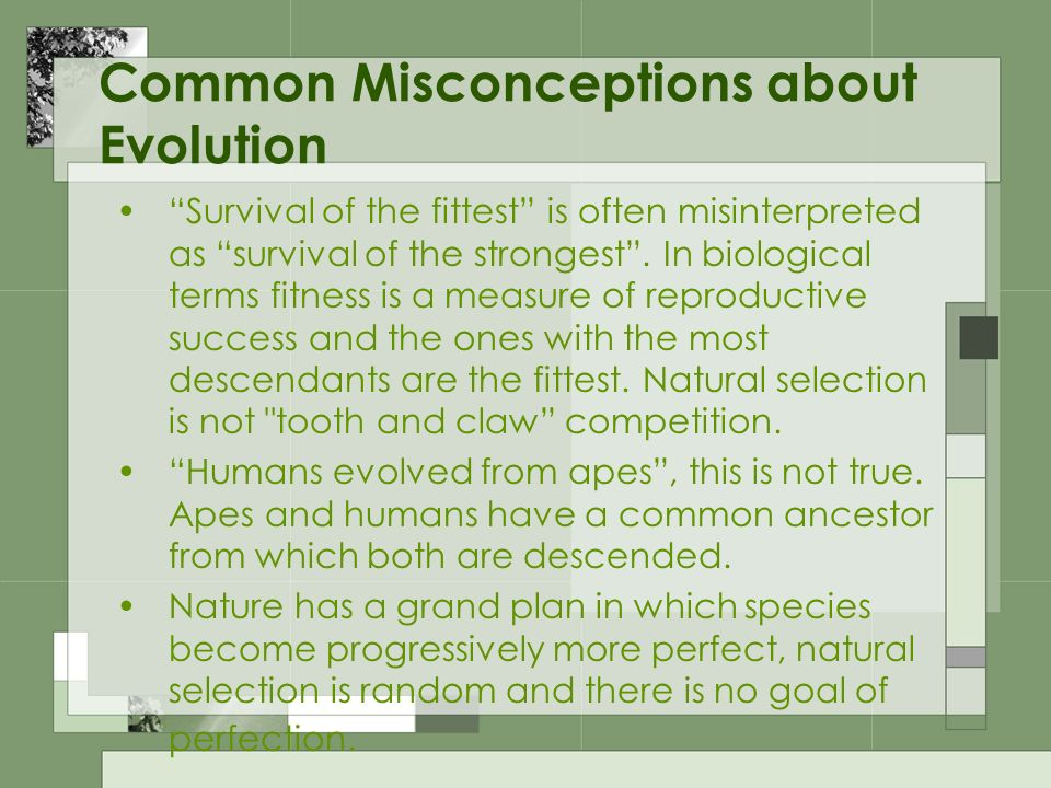 Common Misconceptions about Evolution Survival of the fittest is often misinterpreted as survival of the strongest. In biological terms fitness is a m
