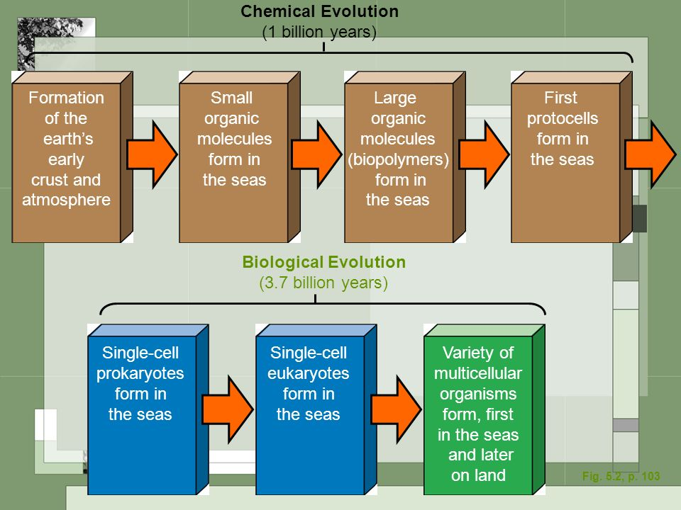 Formation of the earths early crust and atmosphere Small organic molecules form in the seas Large organic molecules (biopolymers) form in the seas Fir