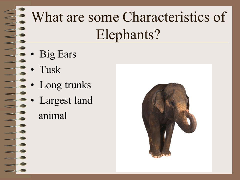CLUE: This animal has big ears and tusks!