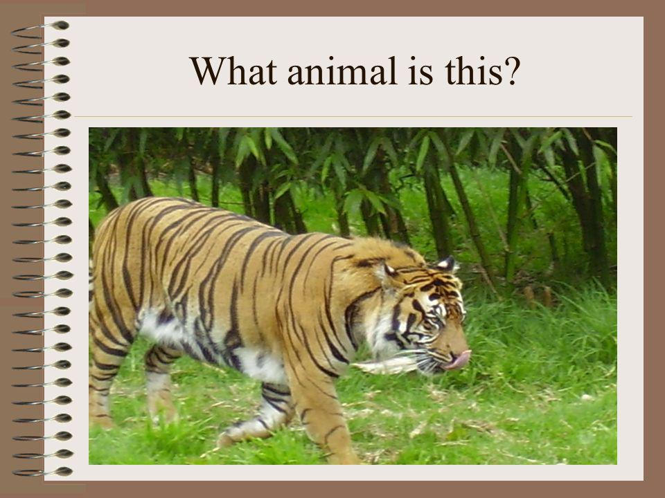 How many animals can you think of 1, 2, 3, 4,…