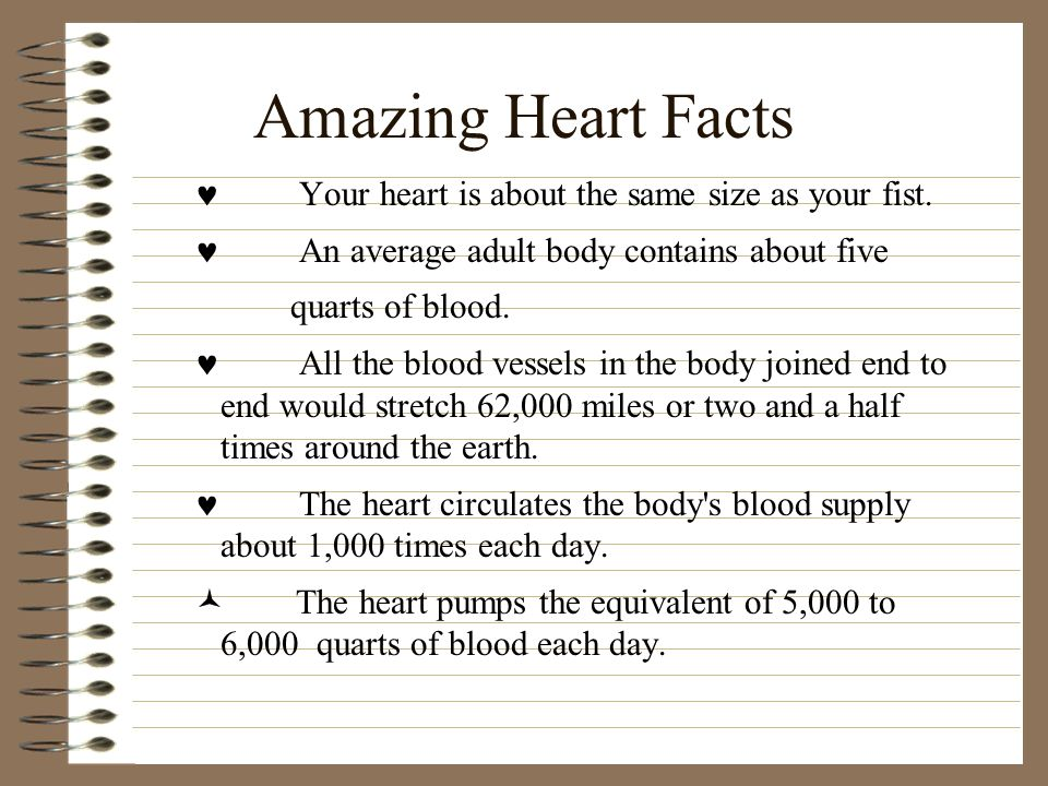 Amazing Heart Facts Your heart is about the same size as your fist. An average adult body contains about five quarts of blood. All the blood vessels i