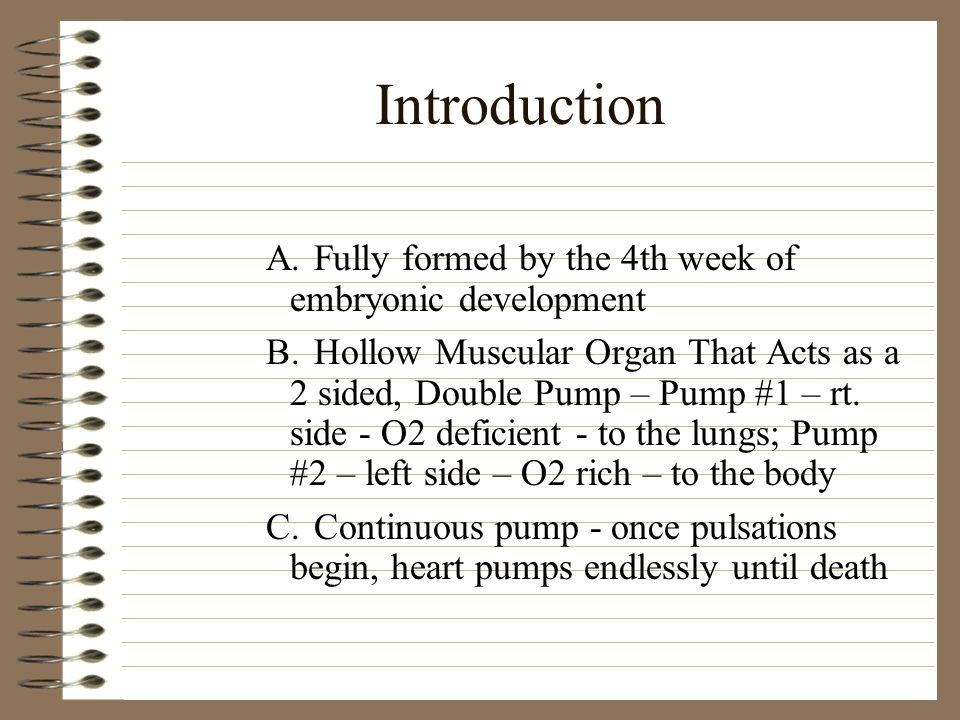 Introduction A.Fully formed by the 4th week of embryonic development B.Hollow Muscular Organ That Acts as a 2 sided, Double Pump – Pump #1 – rt. side