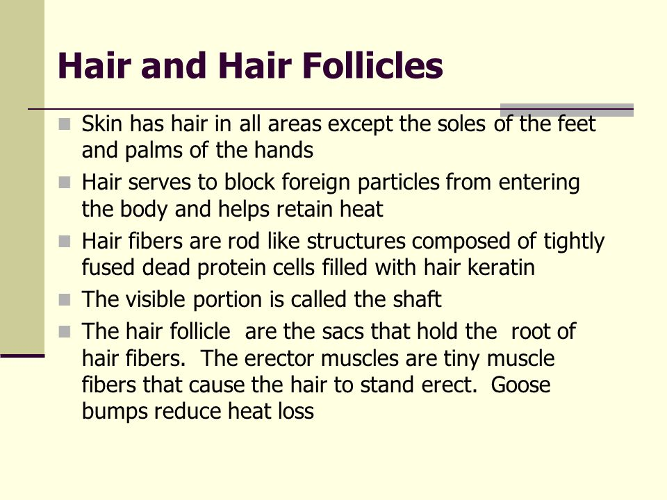 Hair and Hair Follicles Skin has hair in all areas except the soles of the feet and palms of the hands Hair serves to block foreign particles from ent