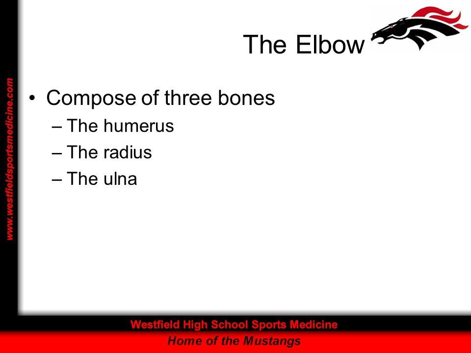 The Elbow Compose of three bones –The humerus –The radius –The ulna
