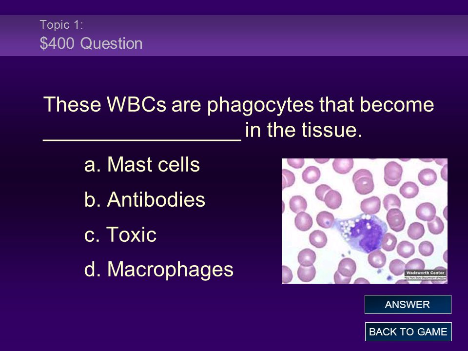 Topic 1: $400 Answer These WBCs are phagocytes that become _________________ in the tissue.