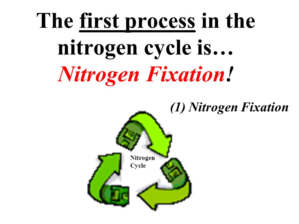 The first process in the nitrogen cycle is… Nitrogen Fixation! (1) Nitrogen Fixation Nitrogen Cycle